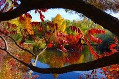Взгляд осени через деревья Стоковые Изображения RF