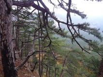 Взгляд от горы Ay Petri стоковая фотография rf