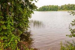 Взгляд от перерастанного пляжа на плавать весельная лодка 8 в водах озера Galve окруженных зеленым лесом стоковое фото rf