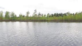 Взгляд от реки леса к берегу во время потока сток-видео