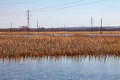 Взгляд от середины озера на воде в которой весна высушила желтые тростники отражен под ясным голубым небом снаружи стоковые фотографии rf