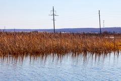 Взгляд от середины озера на воде в которой весна высушила желтые тростники отражен под ясным голубым небом снаружи стоковая фотография rf