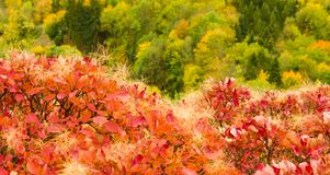 Взгляд от холма в красочном лесе осени Стоковое Изображение RF