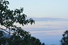 Взгляд от Triund, ряд Kangra Dhauladhar Стоковые Фотографии RF