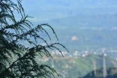 Взгляд от Triund, ряд Kangra Dhauladhar Стоковое Фото