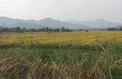 Взгляд панорамы голубых гор и желтого поля стоковые фотографии rf