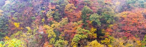 Взгляд панорамы красивой осени на горе стоковые изображения rf