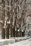 Взгляд парка города Snowy, концепция погоды зимы Стоковое Изображение