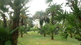 Взгляд парка с пальмами в центре города 4K сток-видео