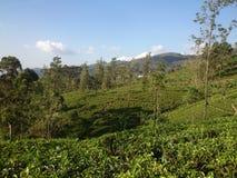 Взгляд плантаций чая в горах стоковое фото rf