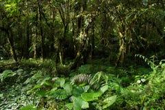 Взгляд плотной вегетации тропического леса с солнечными лучами ocational стоковое изображение