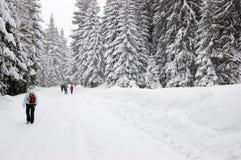 Взгляд покрытых снег спрусов и туристов идя вдоль стоковые изображения
