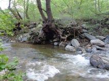 Взгляд потока заводи стоковое изображение