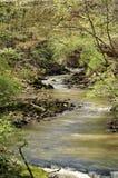 взгляд потока Стоковое Фото