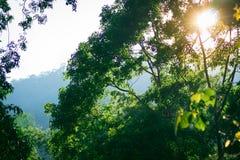 Взгляд природы зеленых лист на запачканной предпосылке в саде с космосом экземпляра используя как ландшафт заводов растительности Стоковое Изображение RF