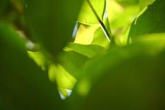 Взгляд природы крупного плана зеленых лист в саде стоковое фото