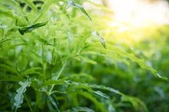 Взгляд природы крупного плана зеленых лист на запачканной растительности стоковые фотографии rf