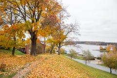 Взгляд прогулки в желтом цвете осени живет Стоковое Изображение RF