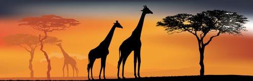 Взгляд пустыни с жирафами Знамя предпосылки Стоковая Фотография RF
