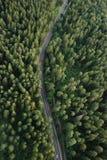 взгляд пущи birdseye стоковое изображение