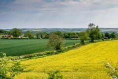Взгляд раннего лета свертывать английскую сельскую местность Стоковое Фото