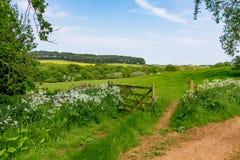 Взгляд раннего лета свертывать английскую сельскую местность Стоковые Фото