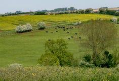 Взгляд раннего лета свертывать английскую сельскую местность Стоковое фото RF