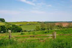 Взгляд раннего лета свертывать английскую сельскую местность стоковые фотографии rf