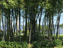 Взгляд реки в Fort Myers, Флориде, США Стоковое фото RF