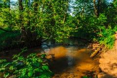 Взгляд реки и деревья затопили с солнцем Стоковое Изображение RF