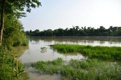 Взгляд реки от банка, лесов к стороне стоковые фотографии rf
