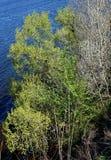 Взгляд реки с синей водой от крутого банка Стоковые Изображения RF