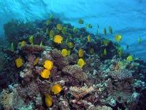 взгляд рифа Стоковое Фото