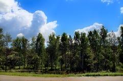 Взгляд рощи и неба из окна автомобиля стоковые изображения