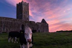 Взгляд руин аббатства Клары Augustinian снаружи Ennis монастыря как раз, графство Клара, Ирландия с красивым заходом солнца внутр стоковые фотографии rf