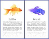 Взгляд рыб золота аквариума и рыб Betta на знамени бесплатная иллюстрация