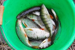 Взгляд свежих рыб в зеленом изолированном шаре Стоковая Фотография RF