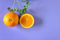 Взгляд сверху апельсина пупка с зеленым растением на предпосылке Стоковое Фото