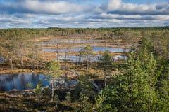 Взгляд сверху болота в Эстонии Поднятые озера трясины в предыдущих веснах стоковые фотографии rf