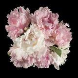 Взгляд сверху букета розовых и белых пионов Стоковое Фото
