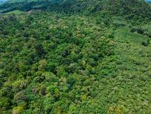 Взгляд сверху глубокого дерева зеленого цвета дождевого леса стоковые фото
