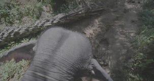 Взгляд сверху езды слона через джунгли видеоматериал