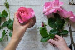 Взгляд сверху женского оформителя аранжируя розы на деревянном столе стоковое изображение