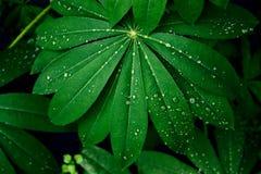 взгляд сверху зеленое намочило листья с падениями воды стоковые изображения