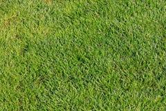 Взгляд сверху зеленой травы для предпосылки Стоковое Изображение