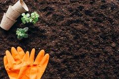 Взгляд сверху зеленых растений, пустых цветочных горшков и резиновых перчаток Стоковое Изображение RF