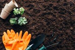 Взгляд сверху зеленых растений, садовничая инструментов, пустых баков и резиновых перчаток Стоковые Изображения