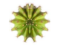 взгляд сверху кактуса стоковая фотография