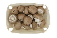 Взгляд сверху коричневых грибов champignons помещенных в деревянной корзине и изолированных на белой предпосылке стоковое фото rf