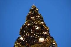 Взгляд сверху красивого дерева Chritsmas в области Buena Vista озера стоковые изображения rf